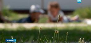 В ПОМОЩ НА СЕМЕЙСТВАТА: Детегледачки за деца, които не са приети в градина