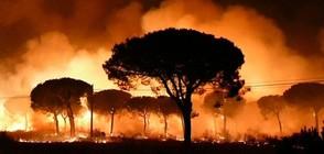 Хиляди евакуирани заради пожар в природен парк в Испания (ВИДЕО+СНИМКИ)
