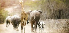 Учените алармират: ¾ от животинските видове може да изчезнат до векове