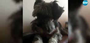 Ротвайлери разкъсаха малко кученце в София