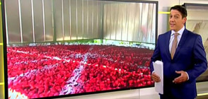 "Заради ""Тур дьо Франс"": Шеф-готвач приготви торта за 2 000 души (ВИДЕО)"
