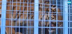 ЕВАКУАЦИЯ: Екип на NOVA засне как спасяват редки животни от Алепо (ВИДЕО)