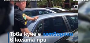 Полицай разби кола, за да спаси затворено в жегата куче (ВИДЕО)