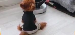 Симпатични кученца се разхлаждат в жегата (ВИДЕО)