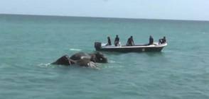 УНИКАЛНА АКЦИЯ: Спасиха две слончета от удавяне (ВИДЕО)