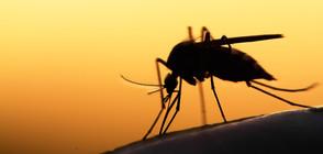 8 неща, заради които комарите ви хапят