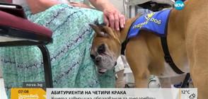 Кучета завършиха образование за терапевти (ВИДЕО)