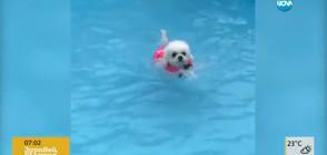 Малко кученце – опитен плувец (ВИДЕО)