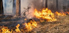 Тийнейджър запалил един от големите горски пожари в Македония