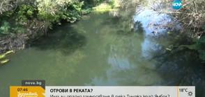 Отровна ли е водата на река Тунджа? (ВИДЕО)