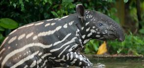 Крадат животните от зоопарка във Венецуела, за да ги ядат