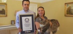 Коя е най-голямата котка в света? (ВИДЕО)