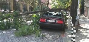 Дърво падна върху лек автомобил в София