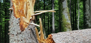 33-годишен пожарникар почина, след като върху него падна дърво