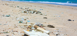 """СКАНДАЛ ЗАРАДИ """"КОРАЛ"""": Кой ще плаща за тоновете отпадъци от свободните зони?"""