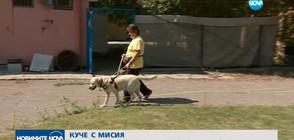 КУЧЕ С МИСИЯ: Асистенти на четири лапи помагат на хора с увреждания