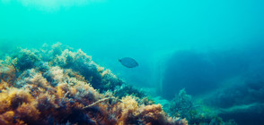 Откриха уникални находки в Черно море