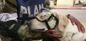 Куче се превърна в легенда след труса в Мексико (ВИДЕО)