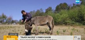 """""""Пълен абсурд"""": Кое е най-работливото магаре в държавата (ВИДЕО)"""