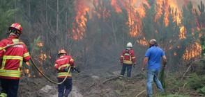 Над 40 жертви на горските пожари в Португалия