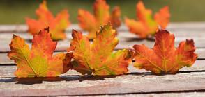 Вещае ли топлата есен люта зима? (ВИДЕО)