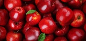 Плодовете поскъпват заради масово измръзване