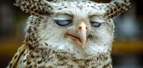 СМЯХ ОТ ПРИРОДАТА: Най-нефотогеничните животни