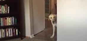 Куче изпитва ужас от килими (ВИДЕО)