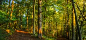 Да живееш в близост до гора е полезно за мозъка