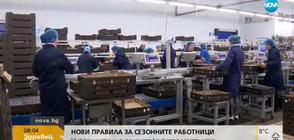 НОВИ ПРАВИЛА: Сезонните работници в ЕС ще взимат колкото местните
