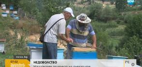 Пчелари: Българският мед е на изчезване
