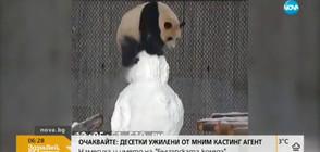 Пандите в зоопарка в Торонто се радват на снега