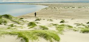 Полярните видове растения са най-застрашени от глобалното затопляне