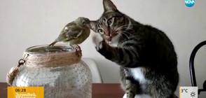 Нетрадиционна дружба между животни (ВИДЕО)