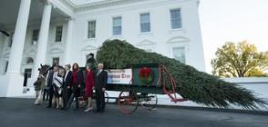 Мелания и синът й приеха коледната елха за Белия дом (ВИДЕО+СНИМКИ)