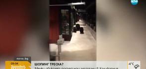 Мечки обикалят посред нощ магазини в Калифорния (ВИДЕО)