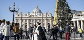 Доставиха коледната елха във Ватикана (СНИМКИ)