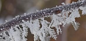 МРАЗОВИТА СУТРИН: Ще става ли още по-студено? (ВИДЕО+СНИМКИ)