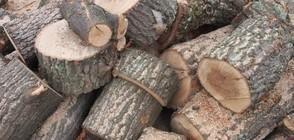 АРЕСТУВАНИТЕ В СВОГЕ: 250 000 лв. за година от незаконна търговия с дърва