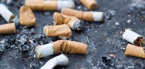 Домовете и колите на пушачите - токсични?