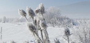 Климатолог: Очаква ни снежна и студена Коледа