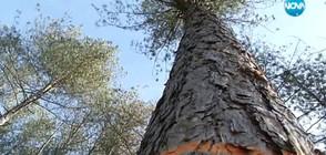 СЛЕД РЕПОРТАЖ НА NOVA: Уволниха шеф в горско стопанство