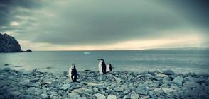 Леденото величие на Антарктида (ГАЛЕРИЯ)