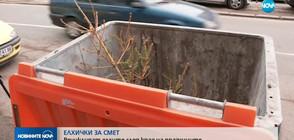 Рециклират коледните дръвчета след края на празниците (ВИДЕО)