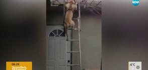 ЗАБАВНО ОТ ИНТЕРНЕТ: Куче слиза по стълба, деца играят футбол