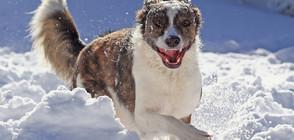 РАДОСТ НА 4 ЛАПИ: Как кучета лудуват в снега (ГАЛЕРИЯ)