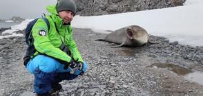 В Темата на NOVA: Антарктика - между два свята