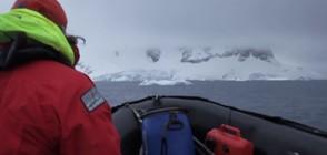 УНИКАЛНИ КАДРИ: Какво засне камера, поставена върху гърба на кит (ВИДЕО)