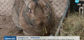 Заловиха мъжа, отмъкнал заек и 10 гълъба от зоокът в Перник