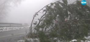 В ПЛЕН НА СНЕГА: Оранжев код за опасно време в почти цяла България (ВИДЕО)